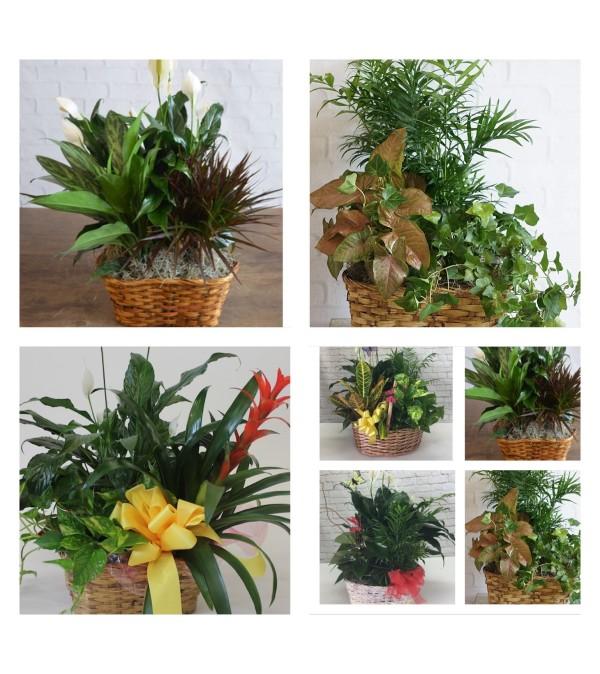 Triple Basket of Plants