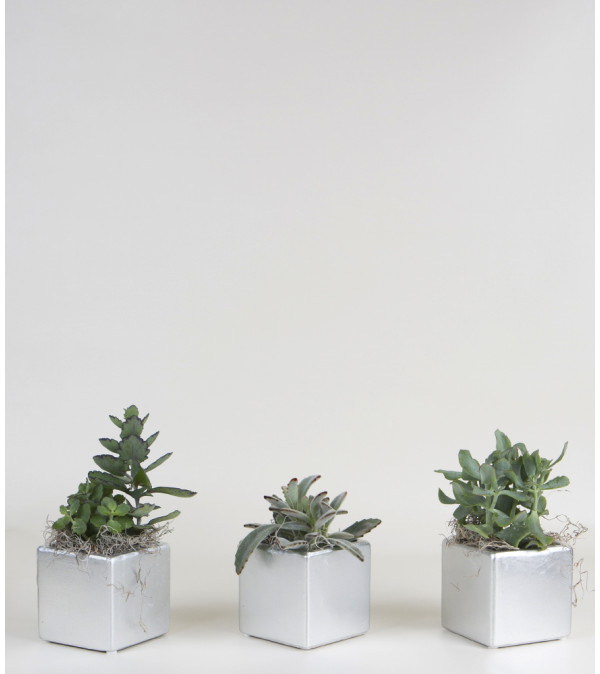 Set of 3 Plants