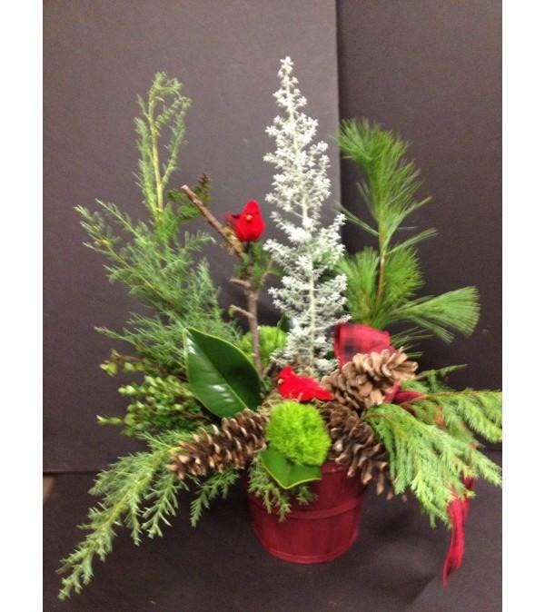 Wintergreen Forest d1