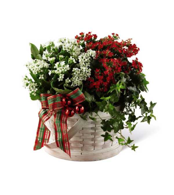 The FTD® Celebrate the Season™ Dishgarden