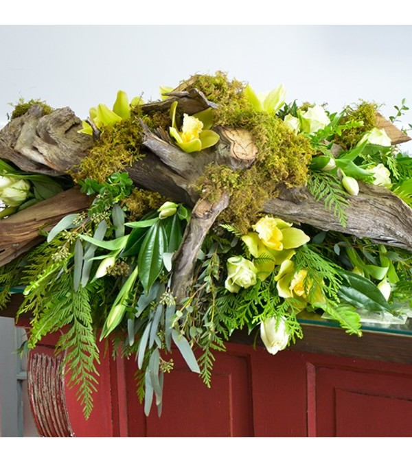 Driftwood and Moss