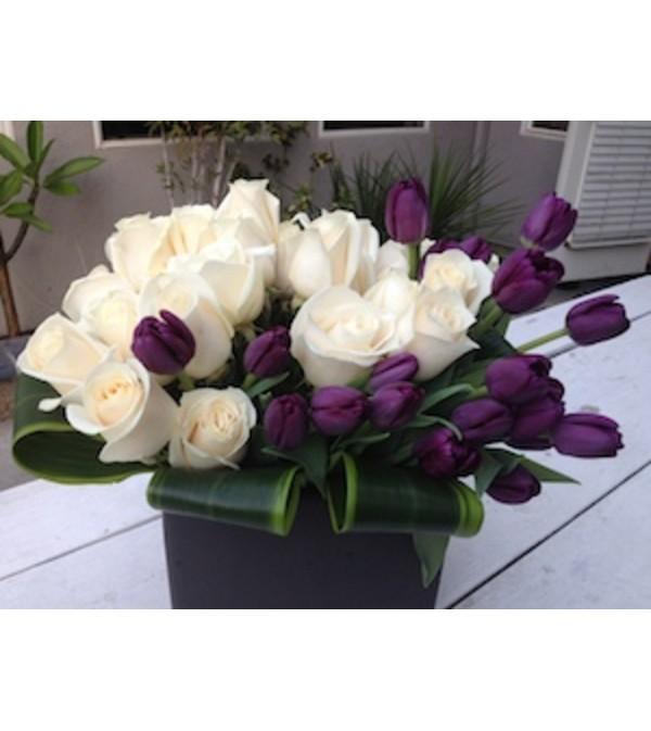 purple tulip Mystic