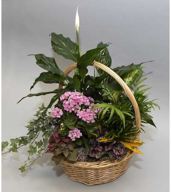 Bursting with Plants