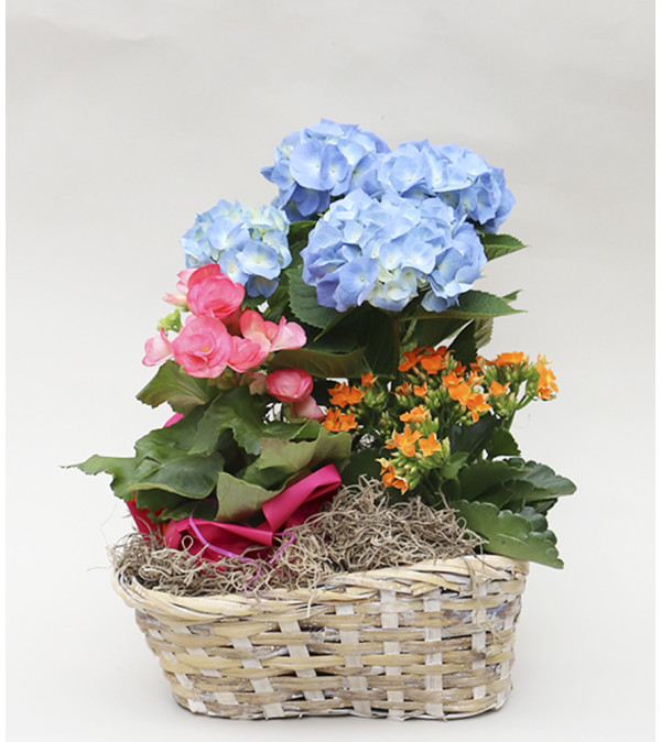 Peter's Spring Garden Basket