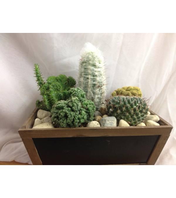 Custom Cactus Garden