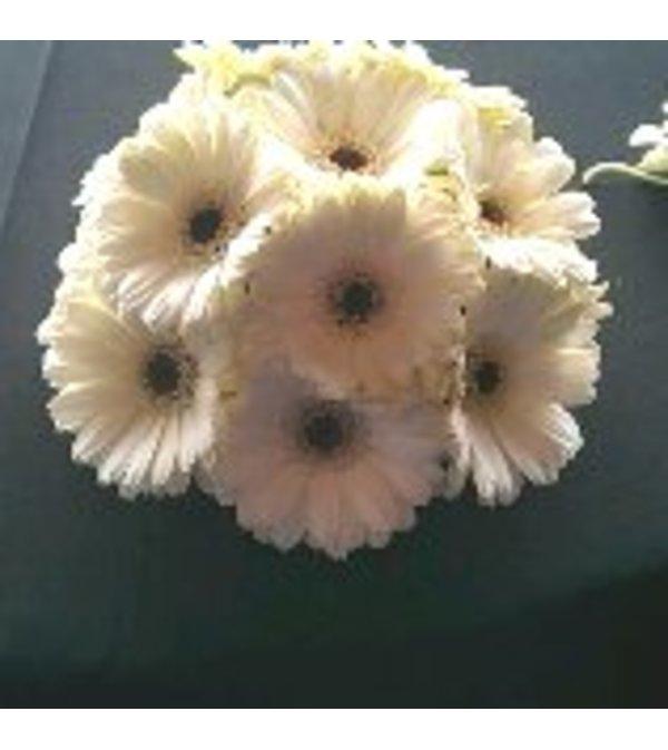 All Gerber daisy Bouquet