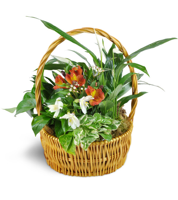 Thinking of You Garden Basket