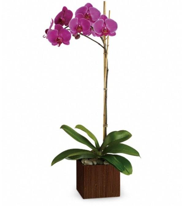 Teleflora's Sublime Orchid