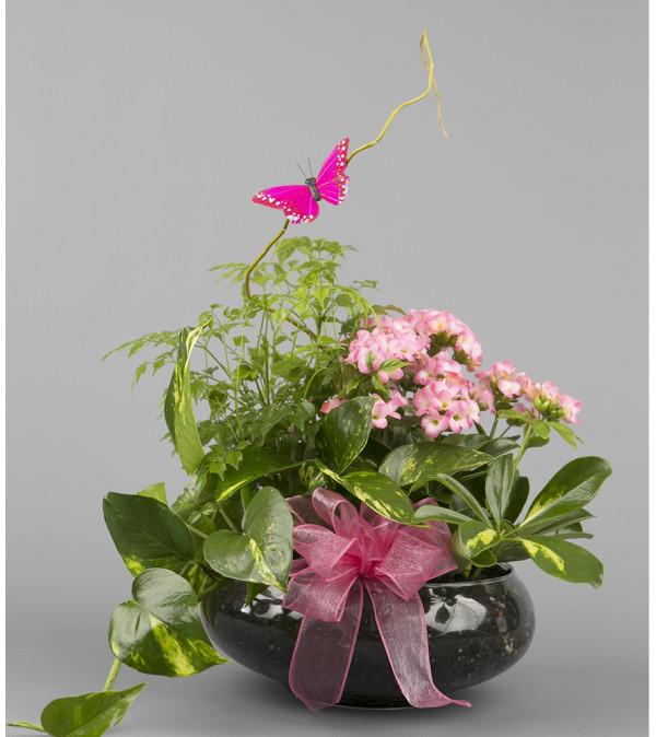 Pink Dishgarden