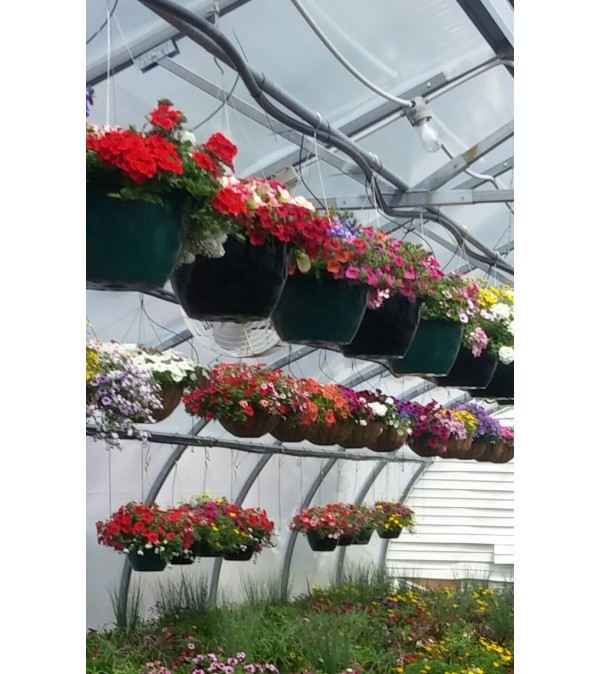 Assorted Hanging Baskets