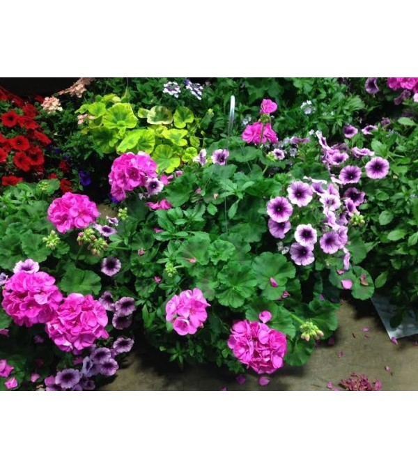 FLOWERING PLANTS