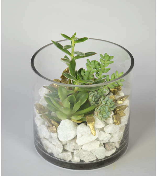 Sterling Succulent