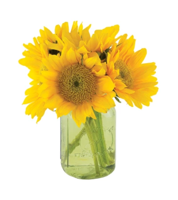Sunflowers in a jar