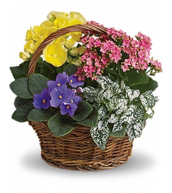 SPRING MIX BASKET