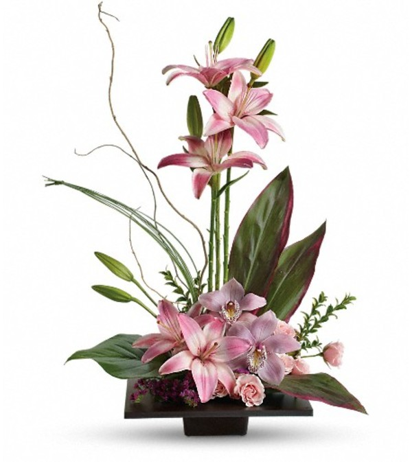 Imagination Blooms with Cymbidium Orchid