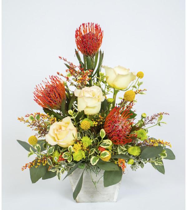 Stunning Protea
