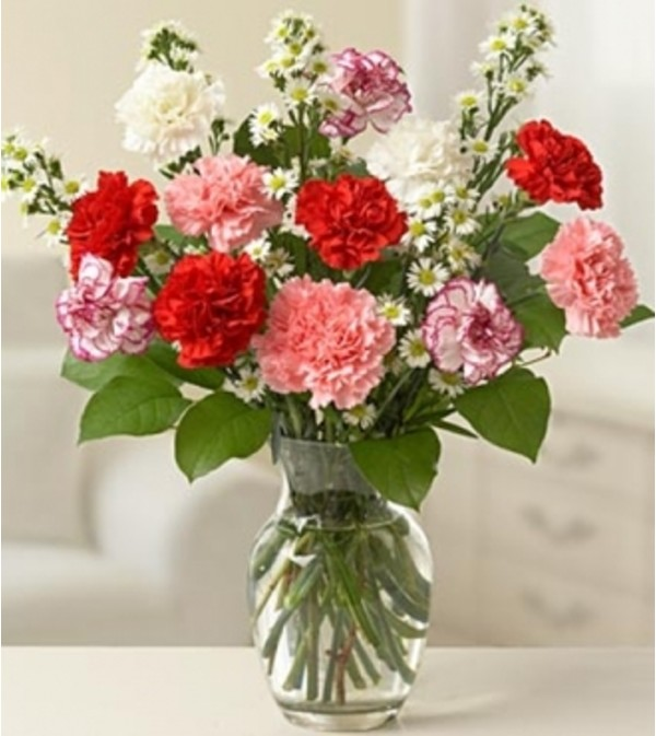 One Dozen Carnations