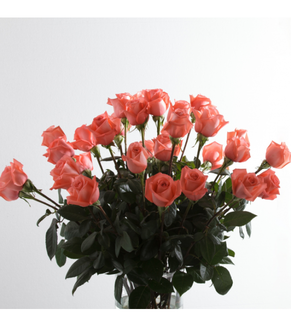 Pink Supreme Roses