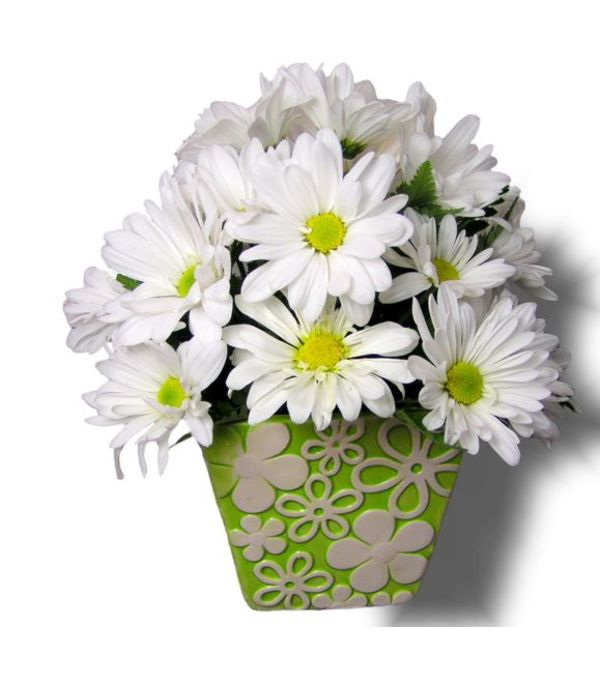 White Daisy Dream