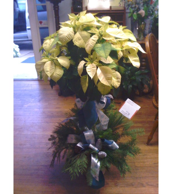 White Poinsettia Tree