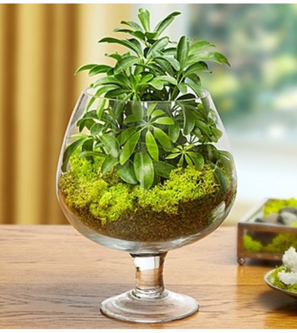 Brandy Glass Garden