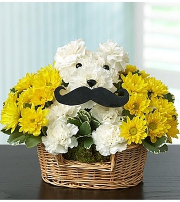 Mustache Dog