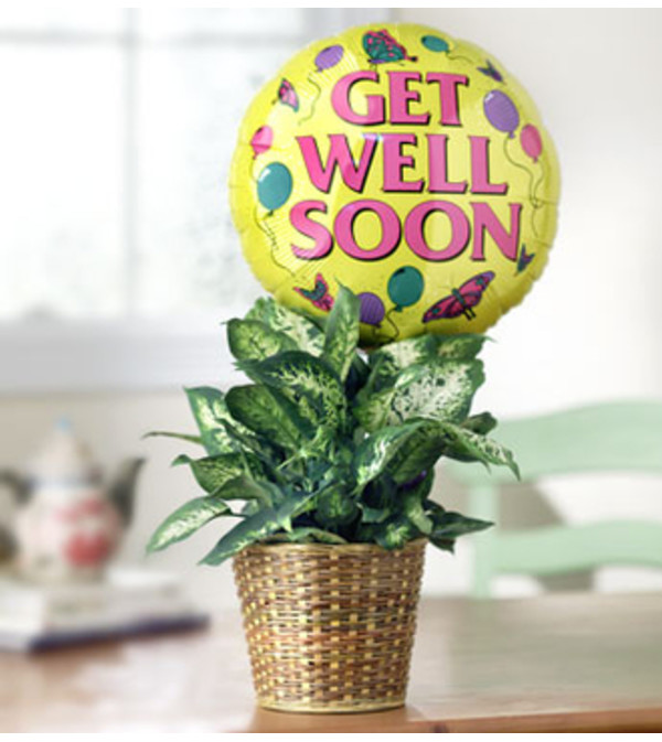 Get Well Green Plant with Balloon