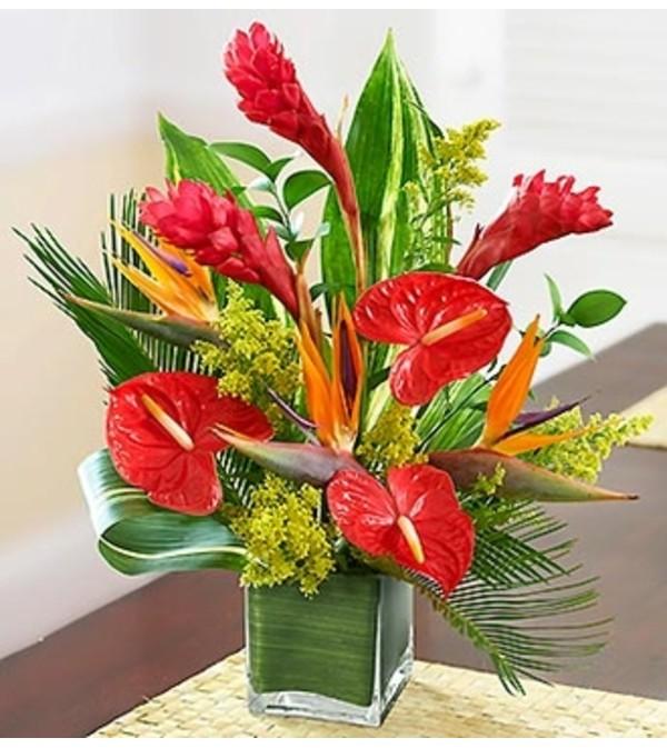 Dees Tropical Paradise Pasadena Tx Florist