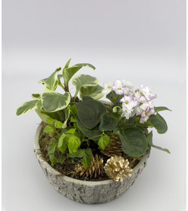 Dish Garden - Small