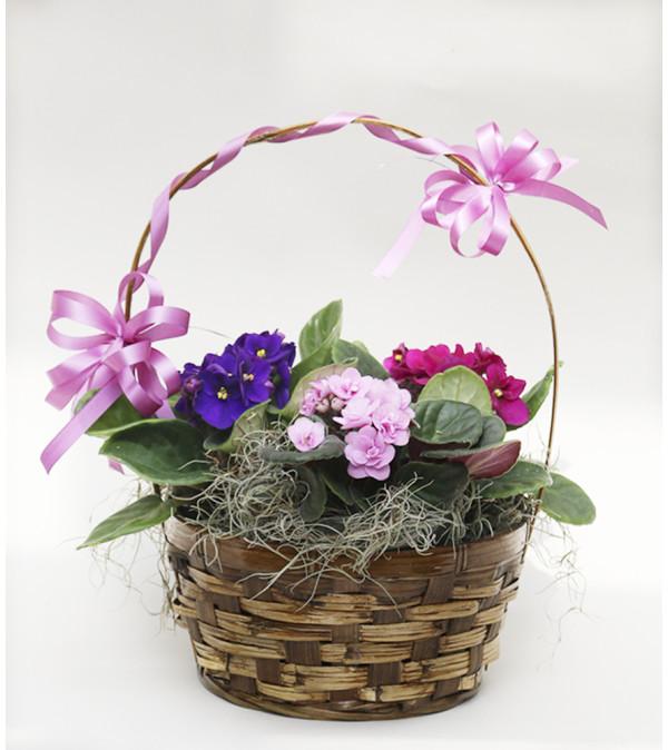 Peter's Lovely Violet Basket