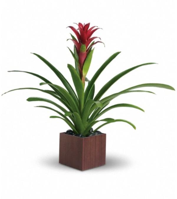 Teleflora's Bromeliad Beauty