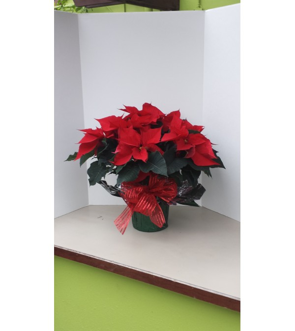 """71/2"""" Christmas Red Poinsettia with bow"""