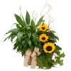 Vivid Memories Plants & Sunshine standard