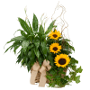 Vivid Memories Plants & Sunshine premium