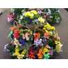 Flowering Plant Baskets