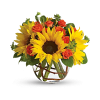 Teleflora - Sunny Sunflowers