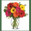 Gerbera Brights Bouquet