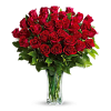 Love And Devotion Long Stem Roses