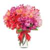 Peruvian Lilly Romance standard