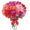 Peruvian Lilly Romance premium