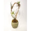 Artful Air plants standard