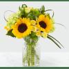Sunlit Days Sunflower standard