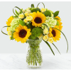 Sunlit Days Sunflower premium