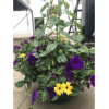 Blooming Baskets -- assorted