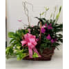 Combination Plant Basket (Color and Plants  May Vary) premium