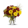 Fall for Daisies by Teleflora SALE! deluxe
