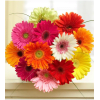 SALE!! 12 Wrapped Mini Gerbera premium