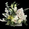 Exquisite Orchids standard