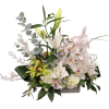 Exquisite Orchids premium