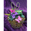 RUSTIC LIVE EASTER BASKET WITH BUTTERFLIES AND MOSS